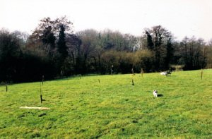 Planting the Spinney in early 1997