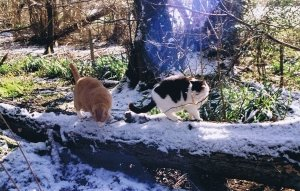 Macavity & Rudge explore our wood