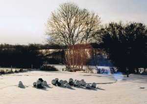 Snow covered brassicas in the Cottage Garden